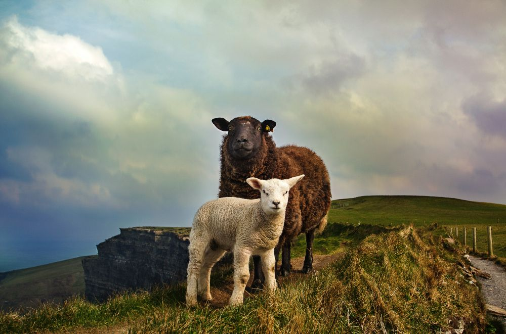 5 Reasons to Explore Ireland In Spring