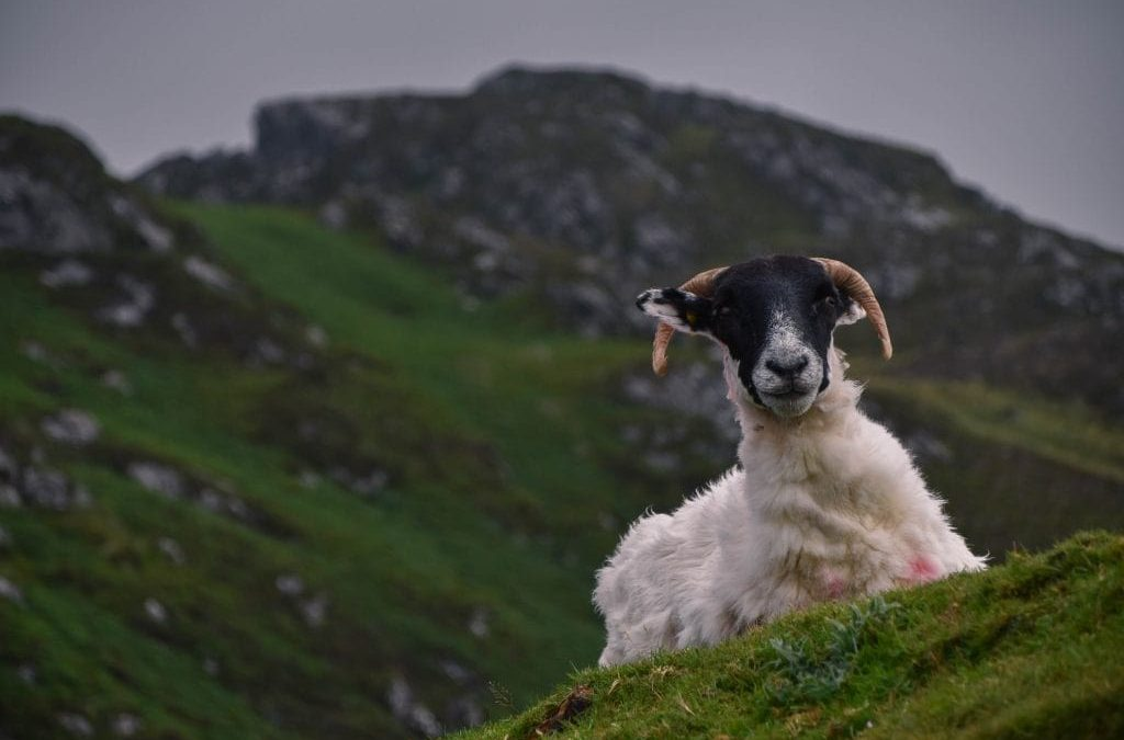 Exploring the Mountains, Cliffs and Beaches of South West Donegal