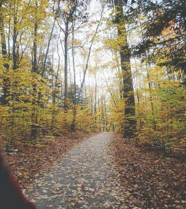 Autumn Mid Term Take Time to Explore