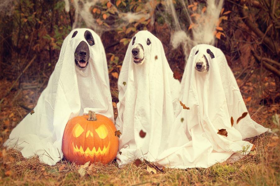 Irish Halloween Traditions